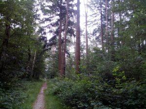 160725 073 Schaarsbergen