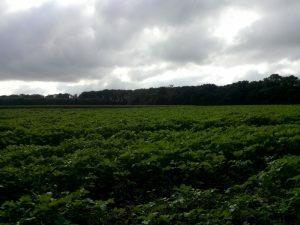 161004 031 Schaarsbergen Warnsborn