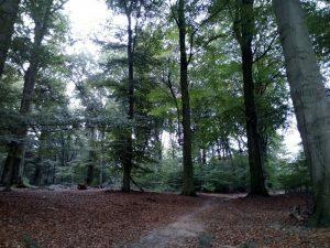 161011 075 Schaarsbergen Warnsborn