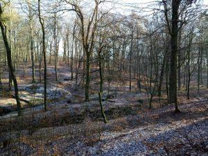 Schaarsbergen Warnsborn